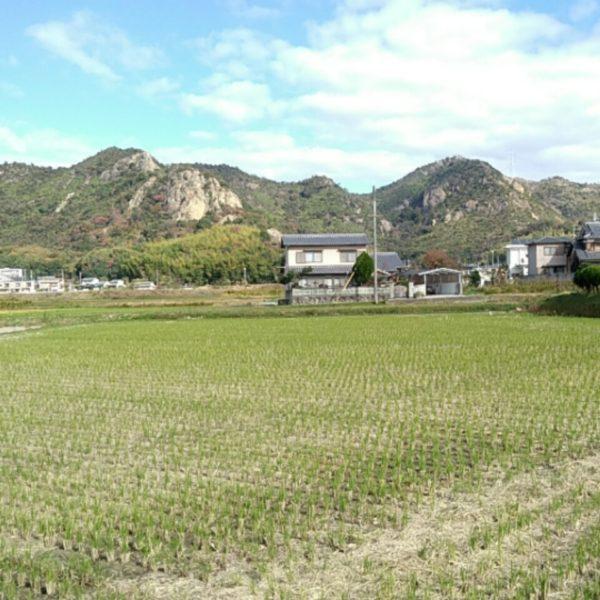 左が御着の岩場、右が山神社の岩場