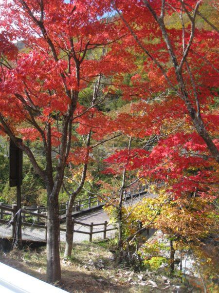 登山口の鮮やかな紅葉
