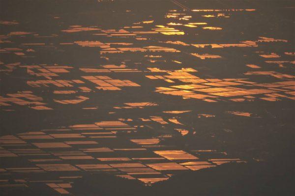 夕日に照らされる水田
