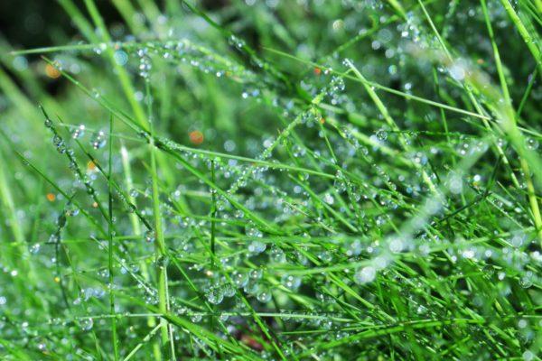 雨粒がついて綺麗