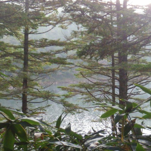 04_朝は霧が出て少し幻想的