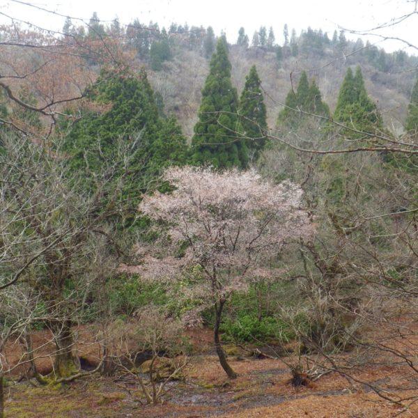 鎌倉山から八丁平